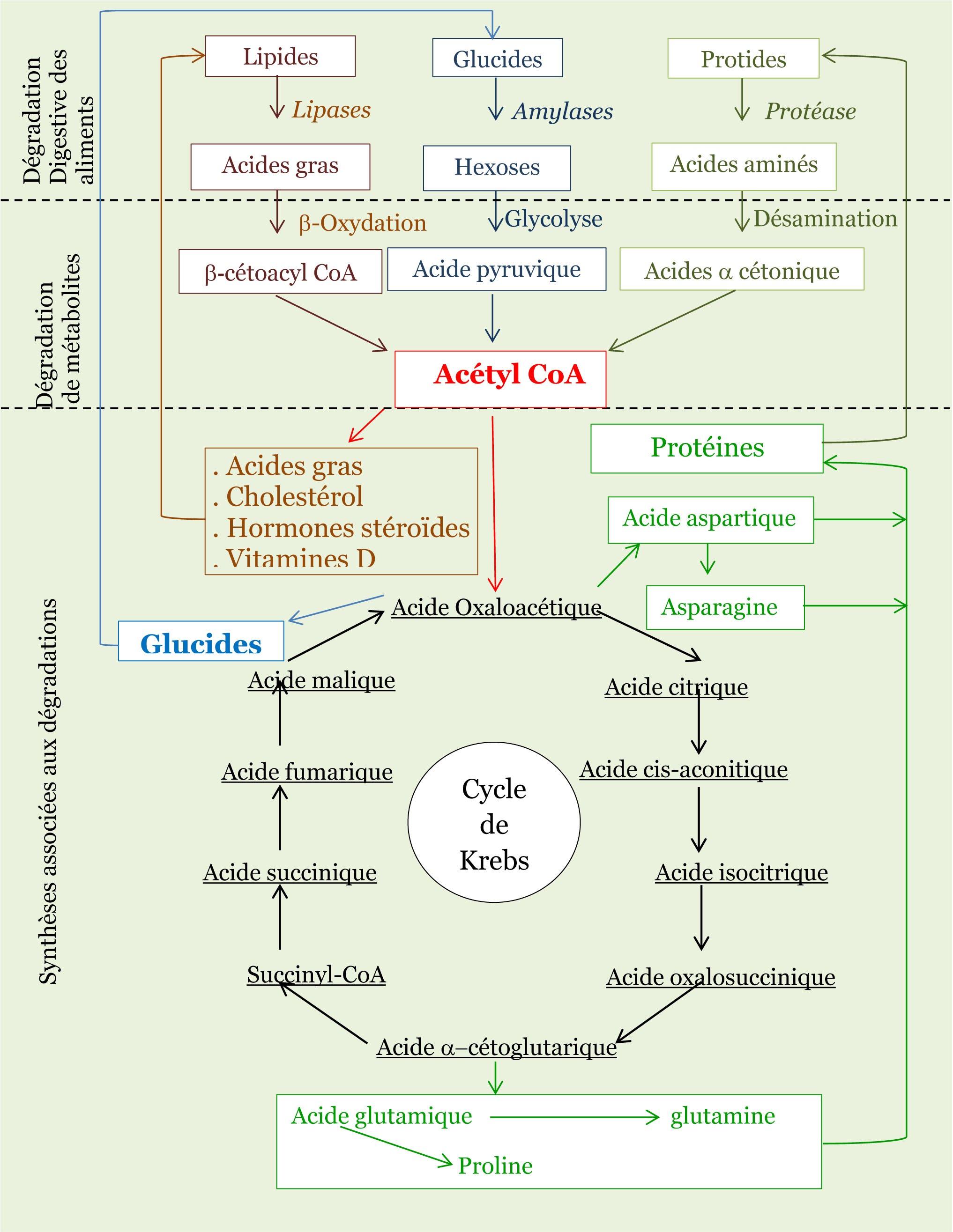 Composition Des Aliments Les Proteines Aliment Et Developpement